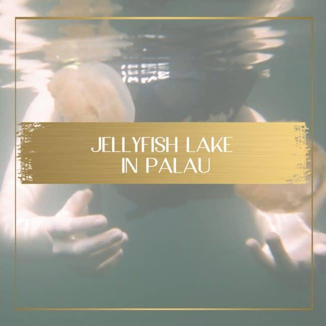 Jellyfish Lake in Palau Feature