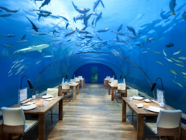 A shark overhead while dining at the conrad maldives