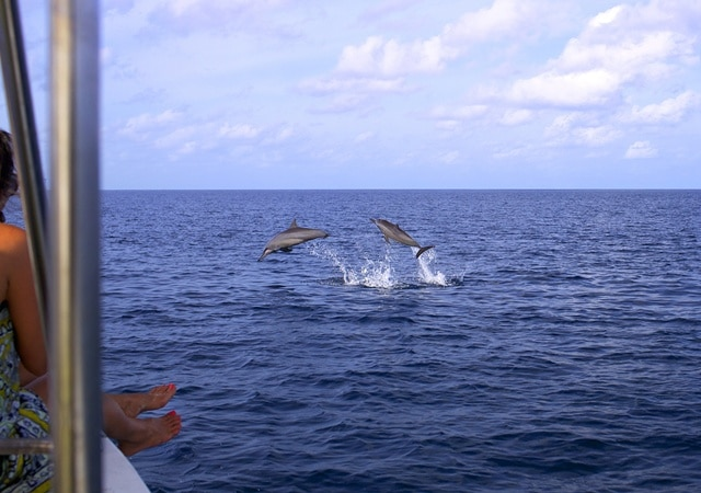 What to do at Six Senses Laamu dolphin watching