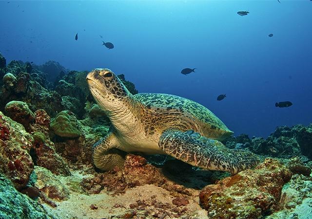 Snorkeling at the Maldives