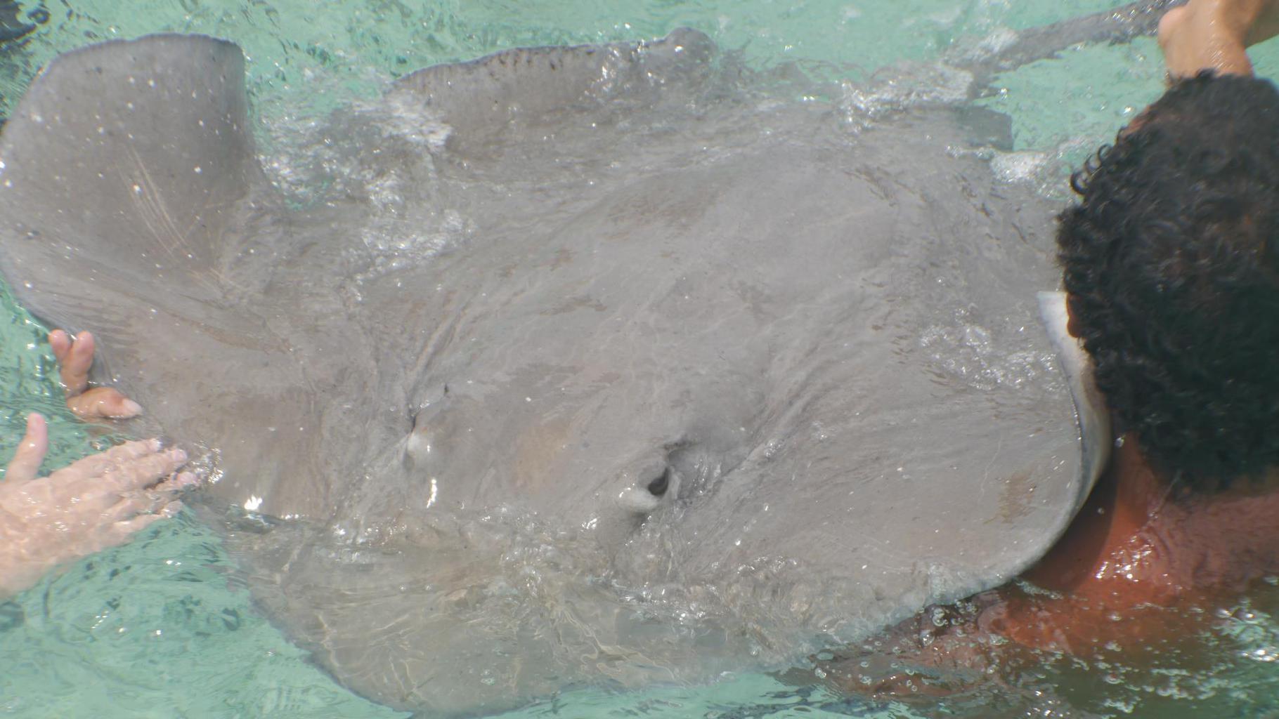 feeding sting rays in Bora Bora