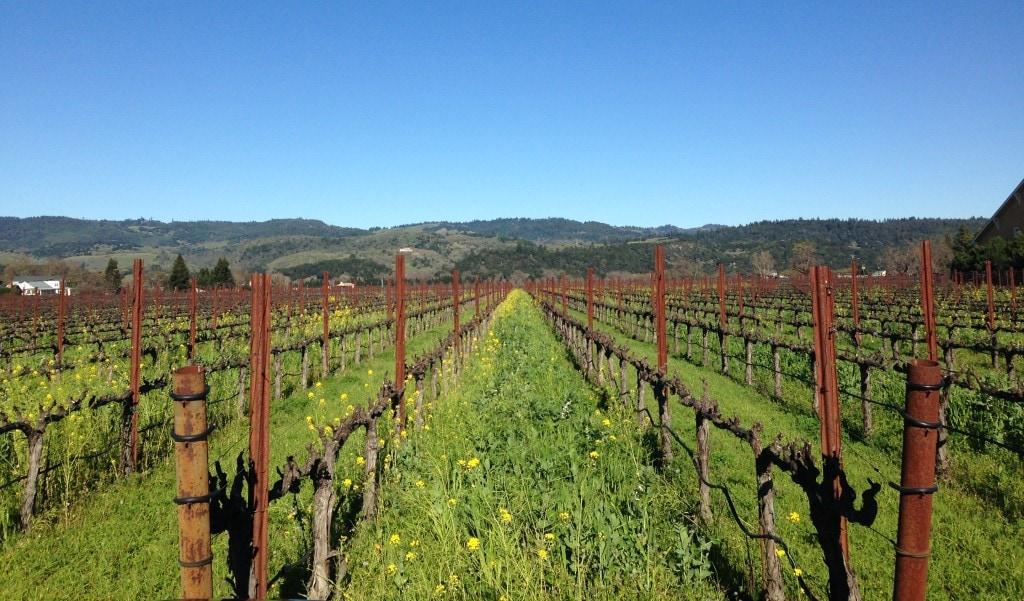 Napa Valley beyond wine