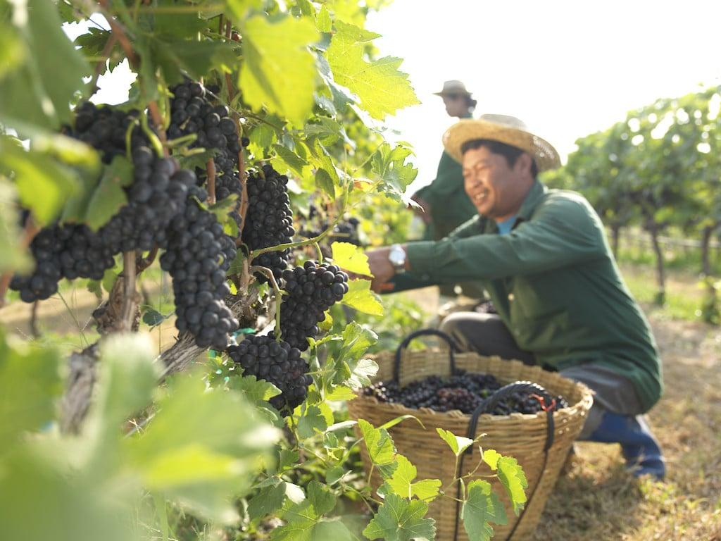Thailand winery