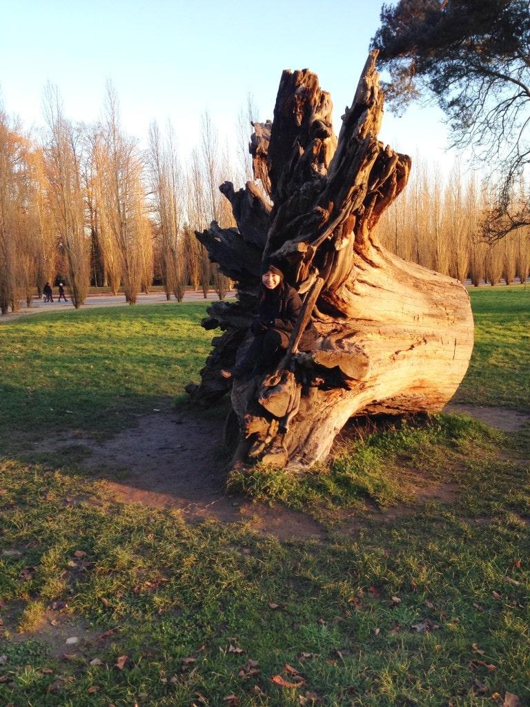 Tree trunk in Paris