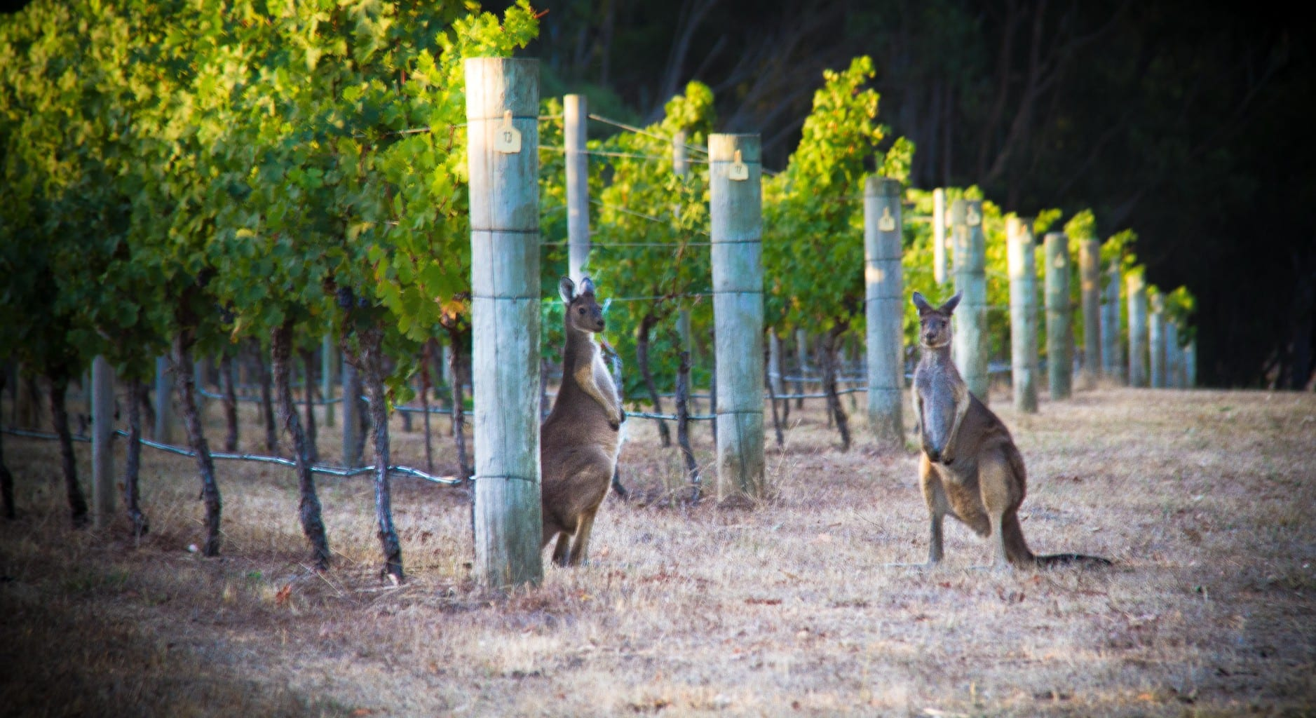 wineries of margaret river