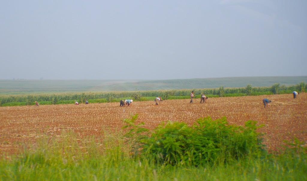 Field labour in North Korea