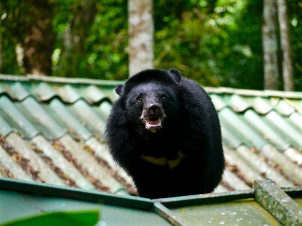 Free the bears rescue center