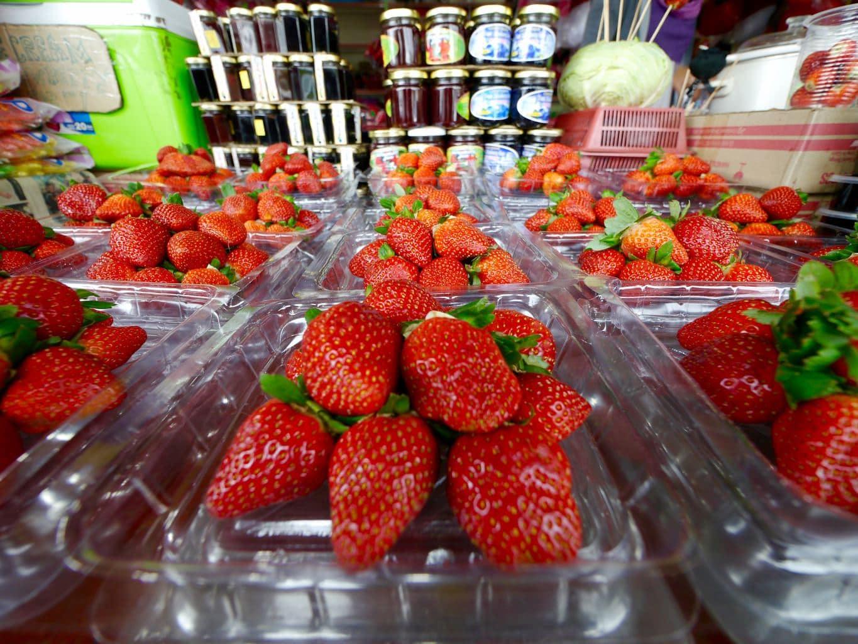 Strawberries for sale Cameron Highlands