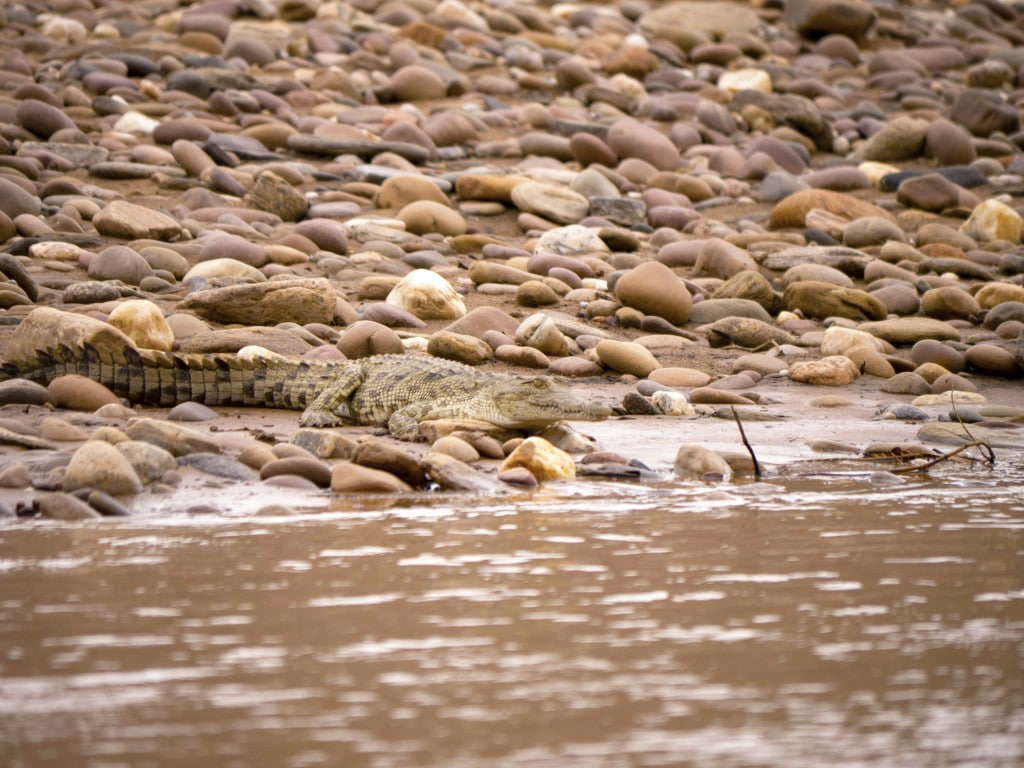 River safari at Serra Cafema