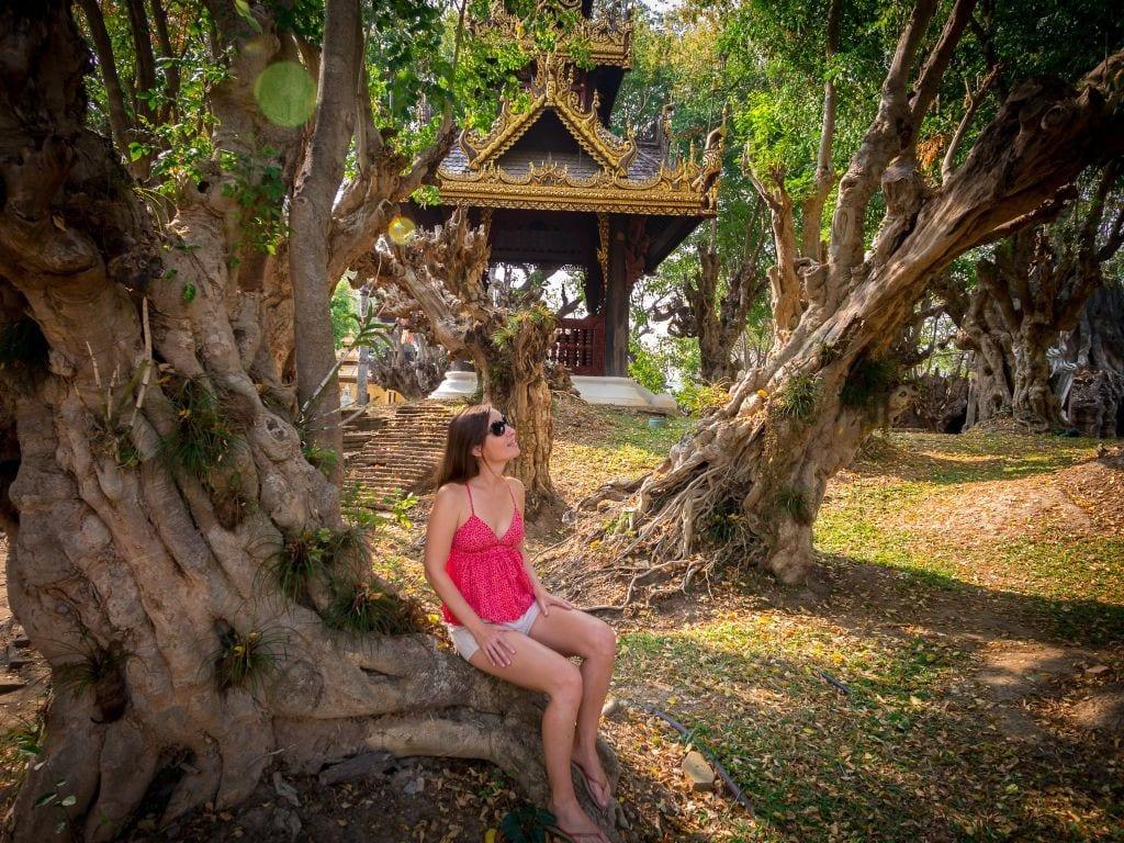 Dhara Devi Chiang Mai gardens