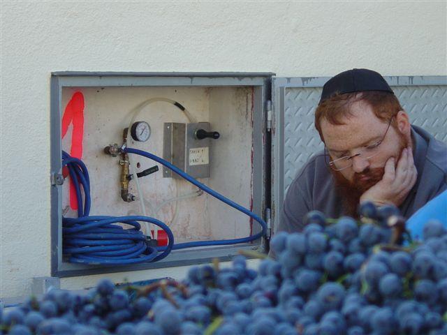 Celler de Capçanes Kosher wine
