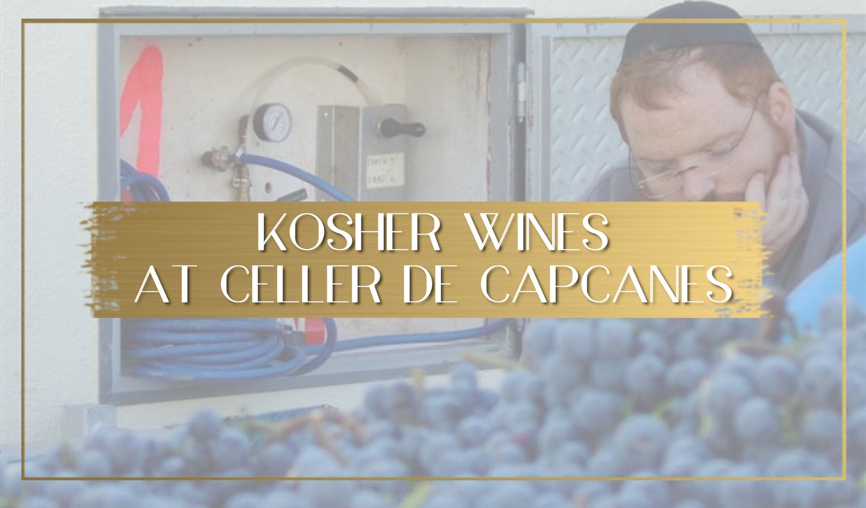 Learning about Kosher wines at Celler de Capcanes main