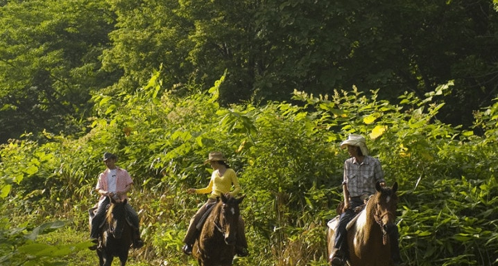 Horse riding Niseko