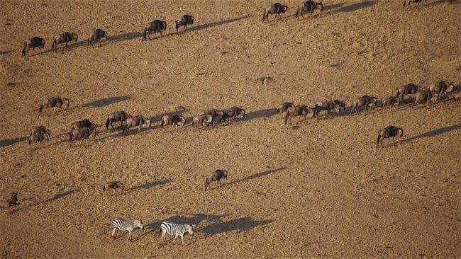 Shadows of wildlife from a hot air balloon safari