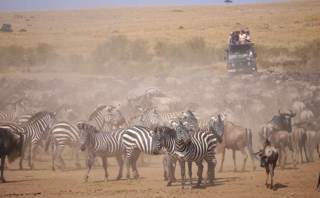 Maasai Mara Great Migration