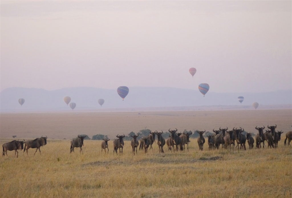 Wildebeest at sunrise in the Masai Mara