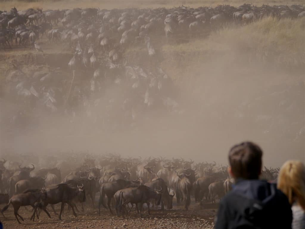 Masai Mara Great Migration