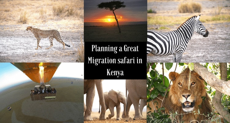 Planning a Great Migration safari