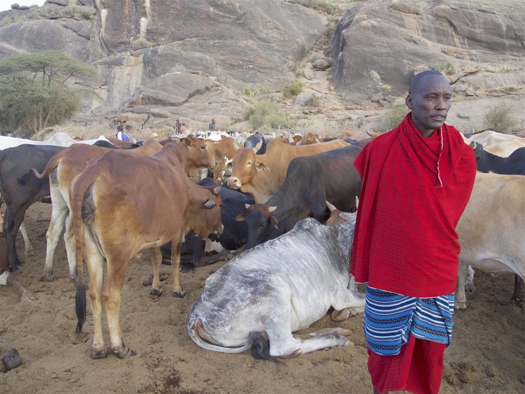 Solomon, our Maasai guide, with his cattle