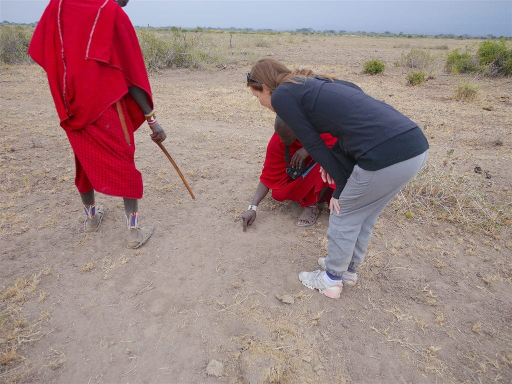 Tracking footprints of big cats