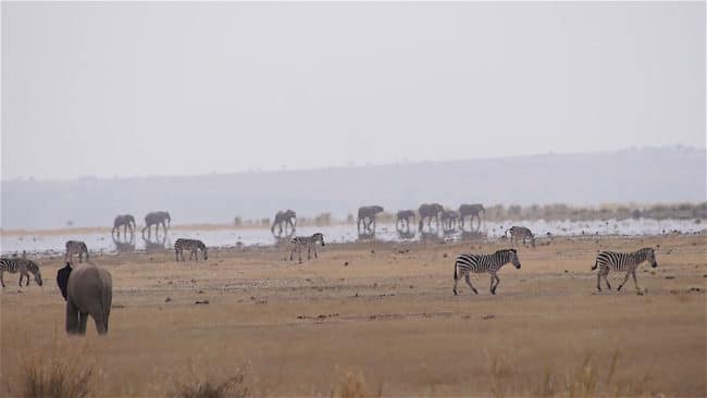 Mirage on the Amboseli plains