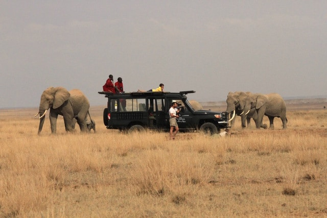 Elephant herd in Amboseli while on a Mobile tented safari