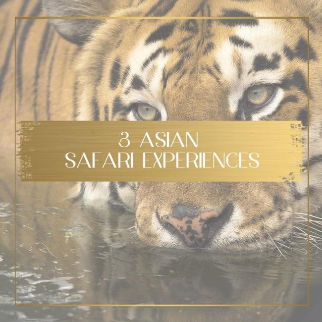 Safari in Asia feature