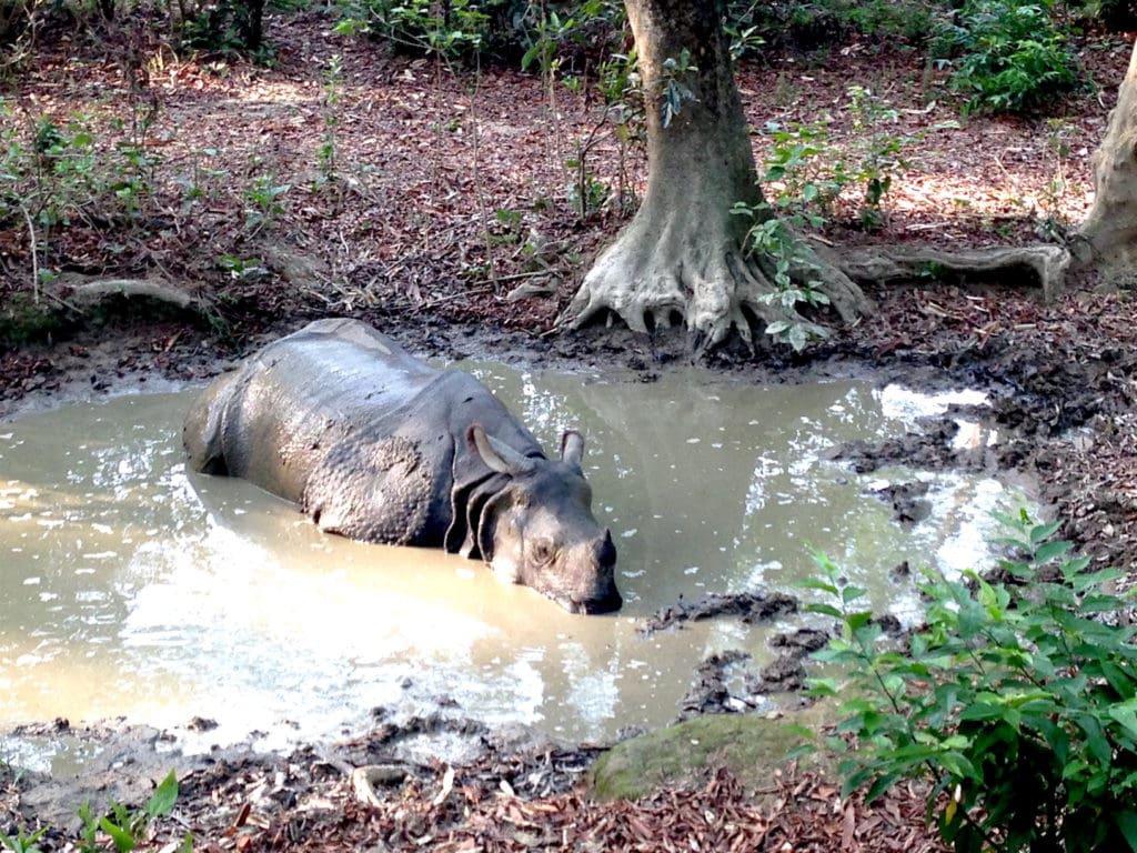 Spotting a rhino in Chitwan while on safari in Asia