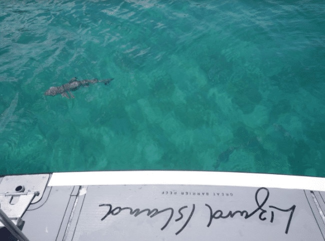 Shark off the boat at Lizard Island resort
