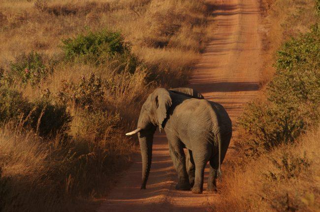 Spotting elephants on safari in Malawi