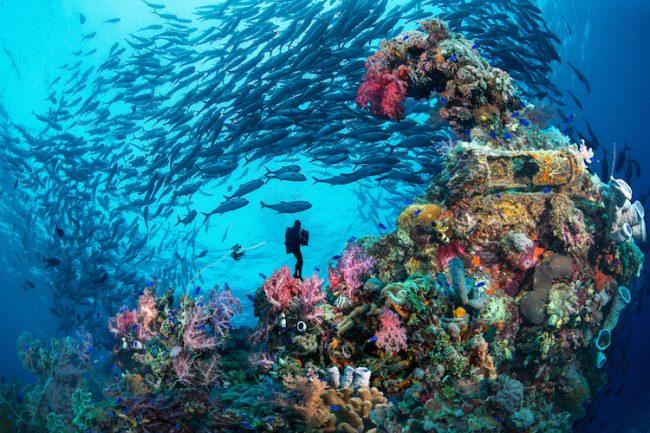 Best dive wrecks in Chuuk