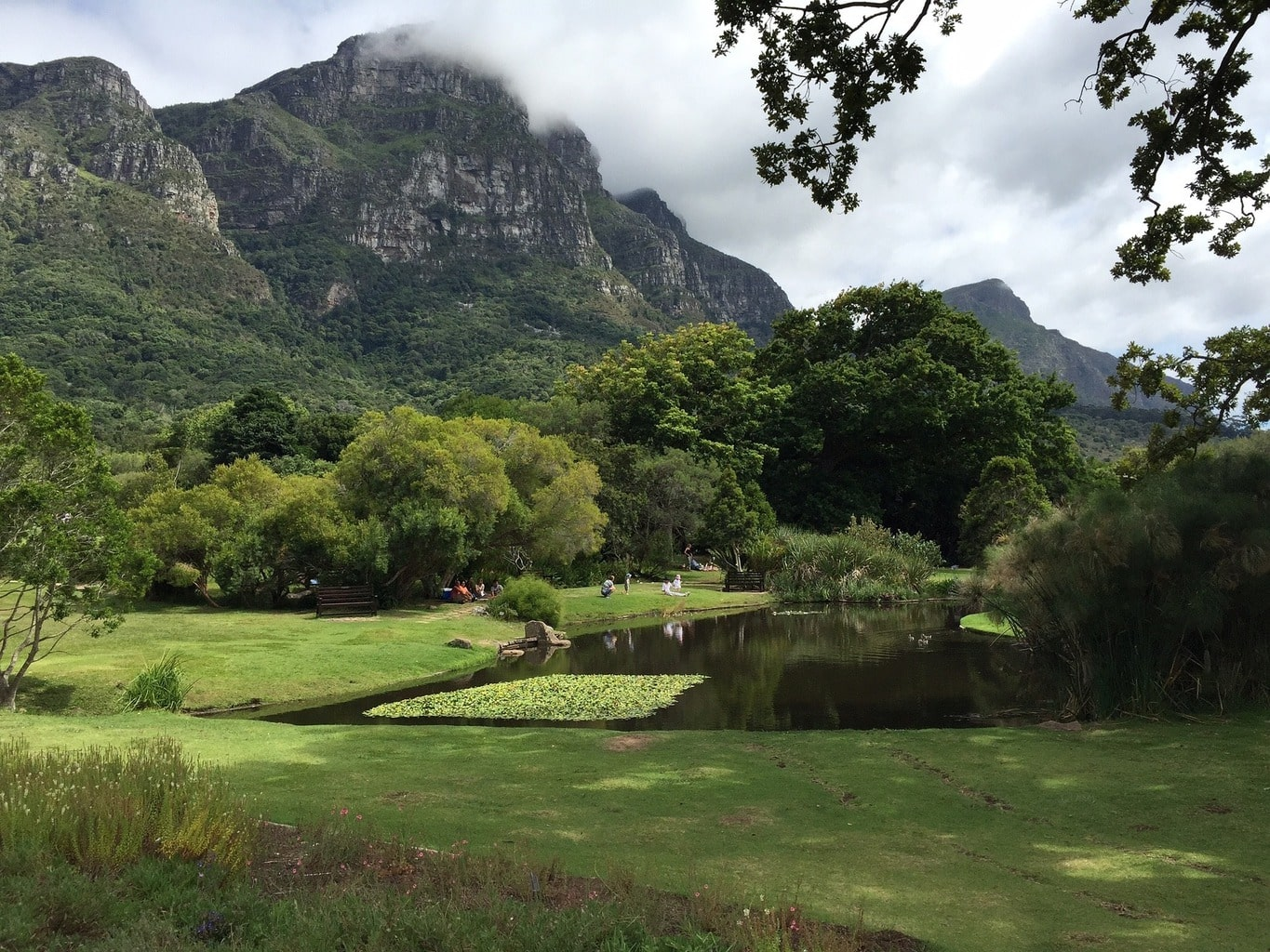 The beauty of nature at Kirstenbosch