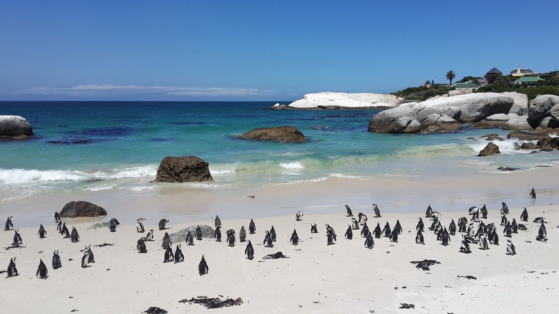 Check out the penguins at Boulders Beach