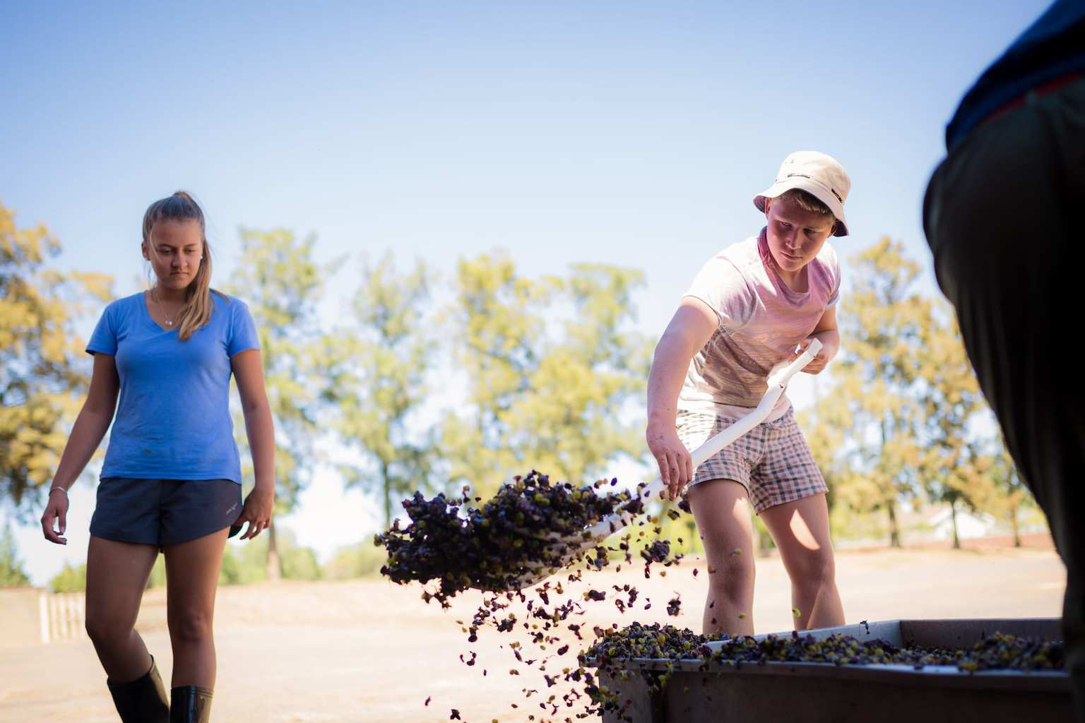 Brother and sister work hard at the harvest
