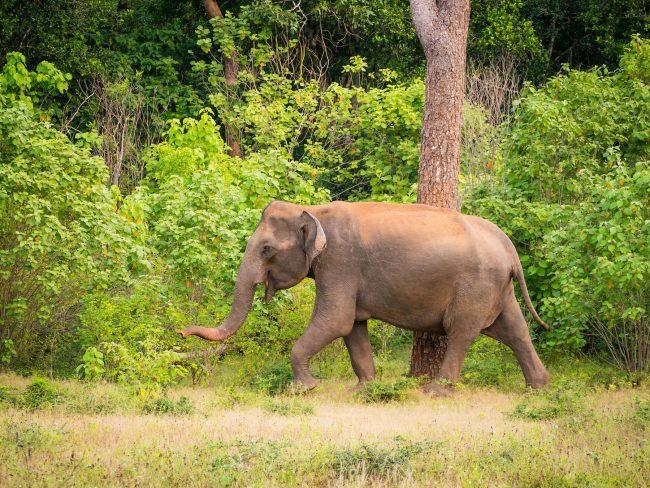 Wildlife at Yala