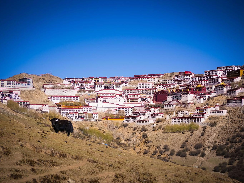 Up in Tibet