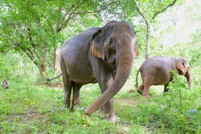 Elephants in Mondulkiri