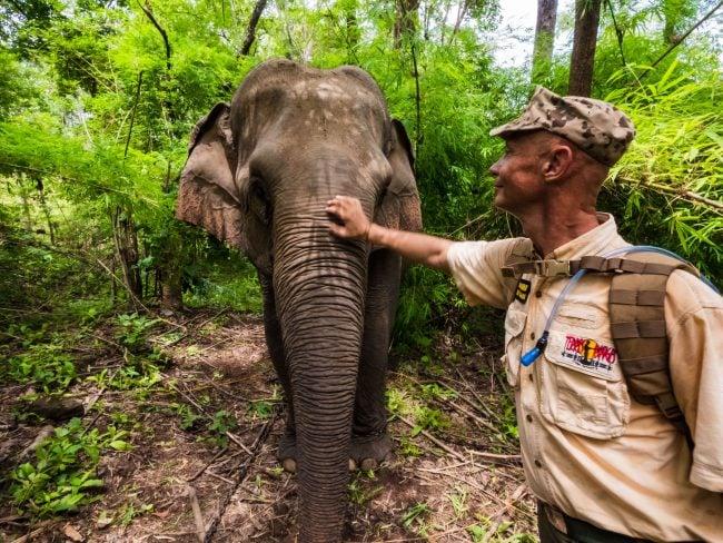 Saved elephants