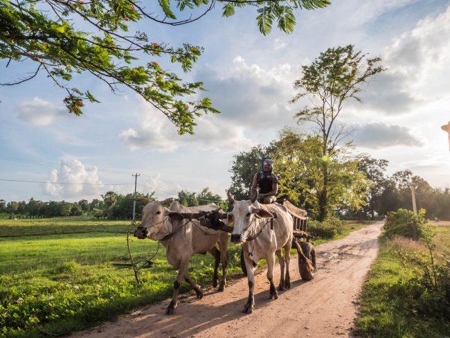 Wagon on Koh Trong
