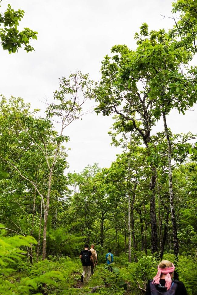 Jungle trekking in Ratanakiri