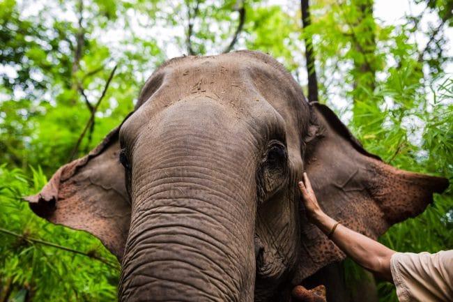Petting the elephant