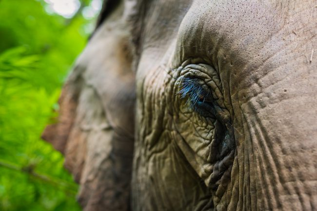 Close up of the elephant