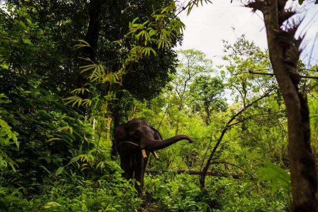 Elephant in Ratanakiri