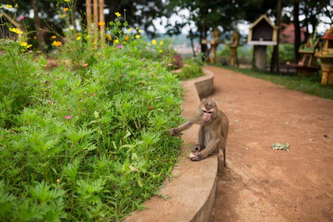 Dohkrormom monkey