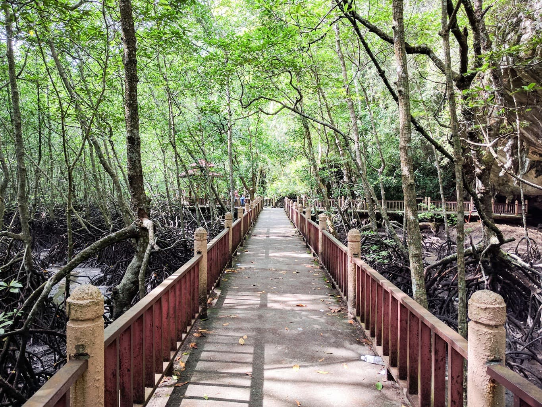 The mangroves of Kilim geoforest park