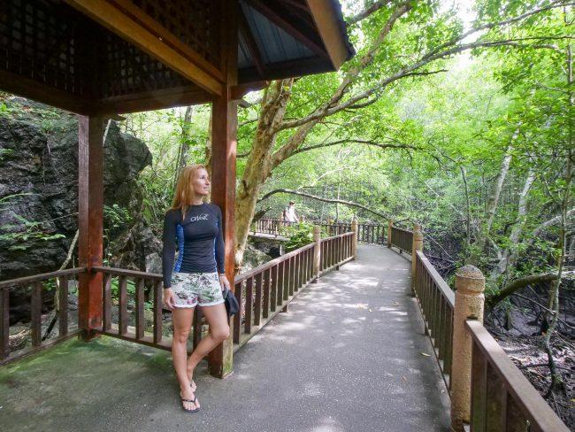 A walk through the mangroves