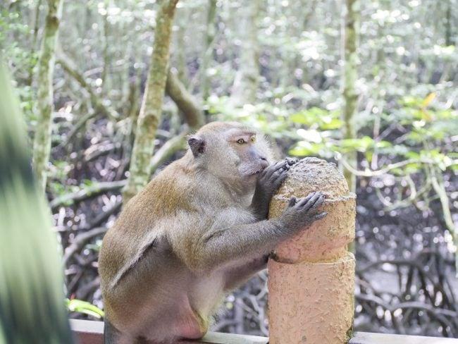 Monkey at Kilim