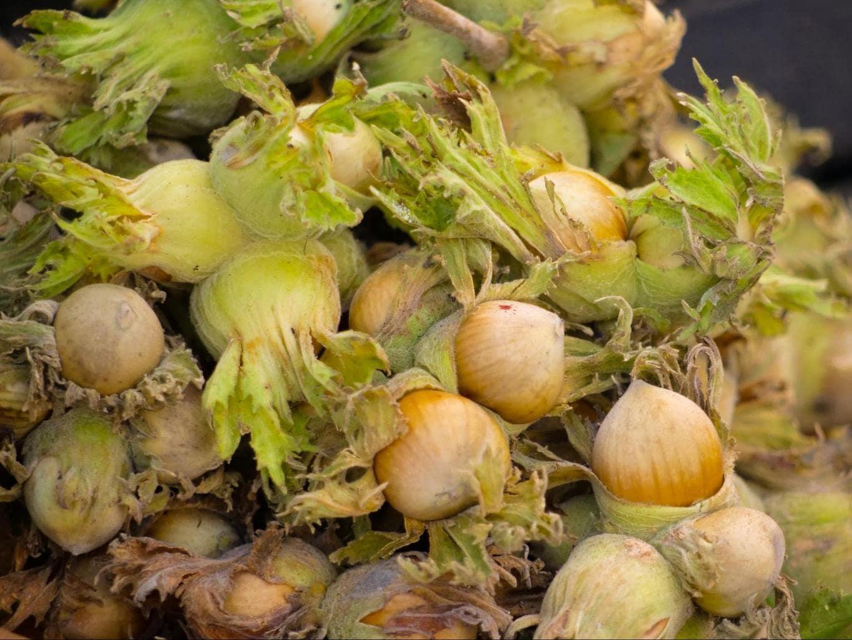 Azerbaijan nuts