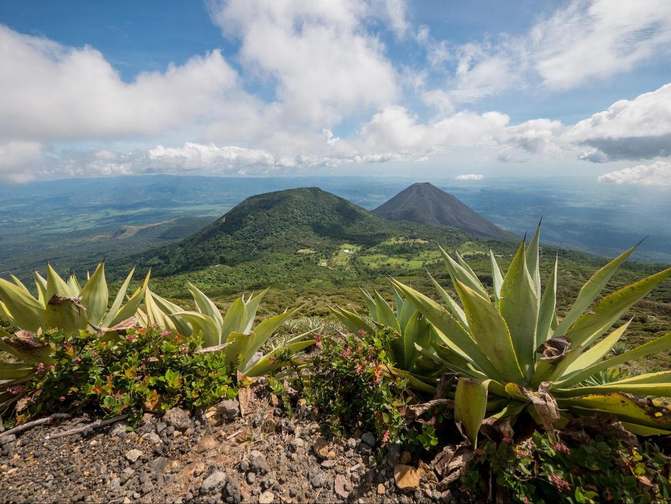 View of volcanoes and cactus