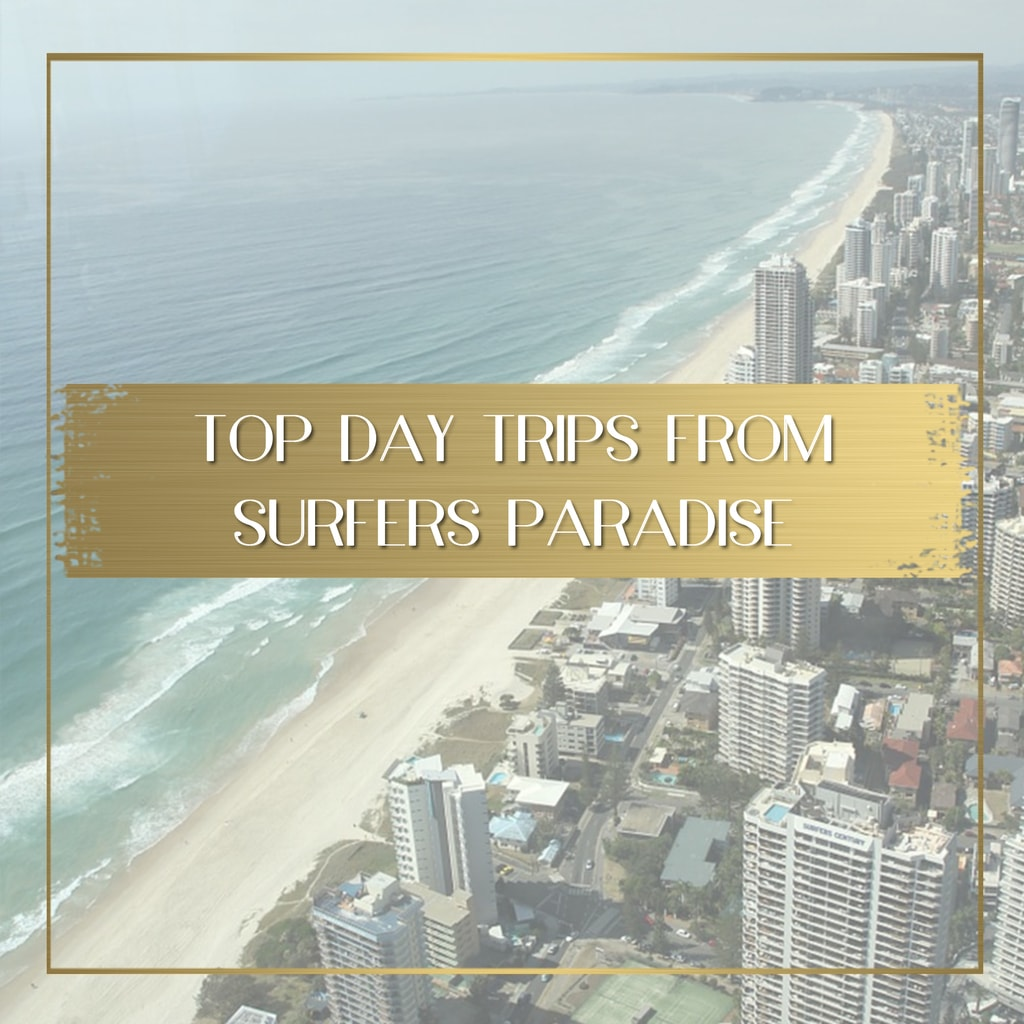 Top Day Trips from Surfers Paradise feature